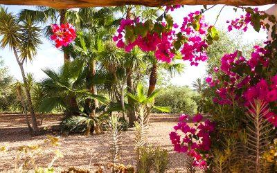 Ibiza: Das »Cas Gasi«