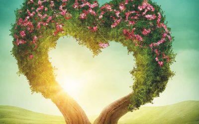 Der Herzbaum