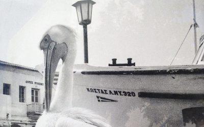 MYKONOS – Requiem für einen Pelikan